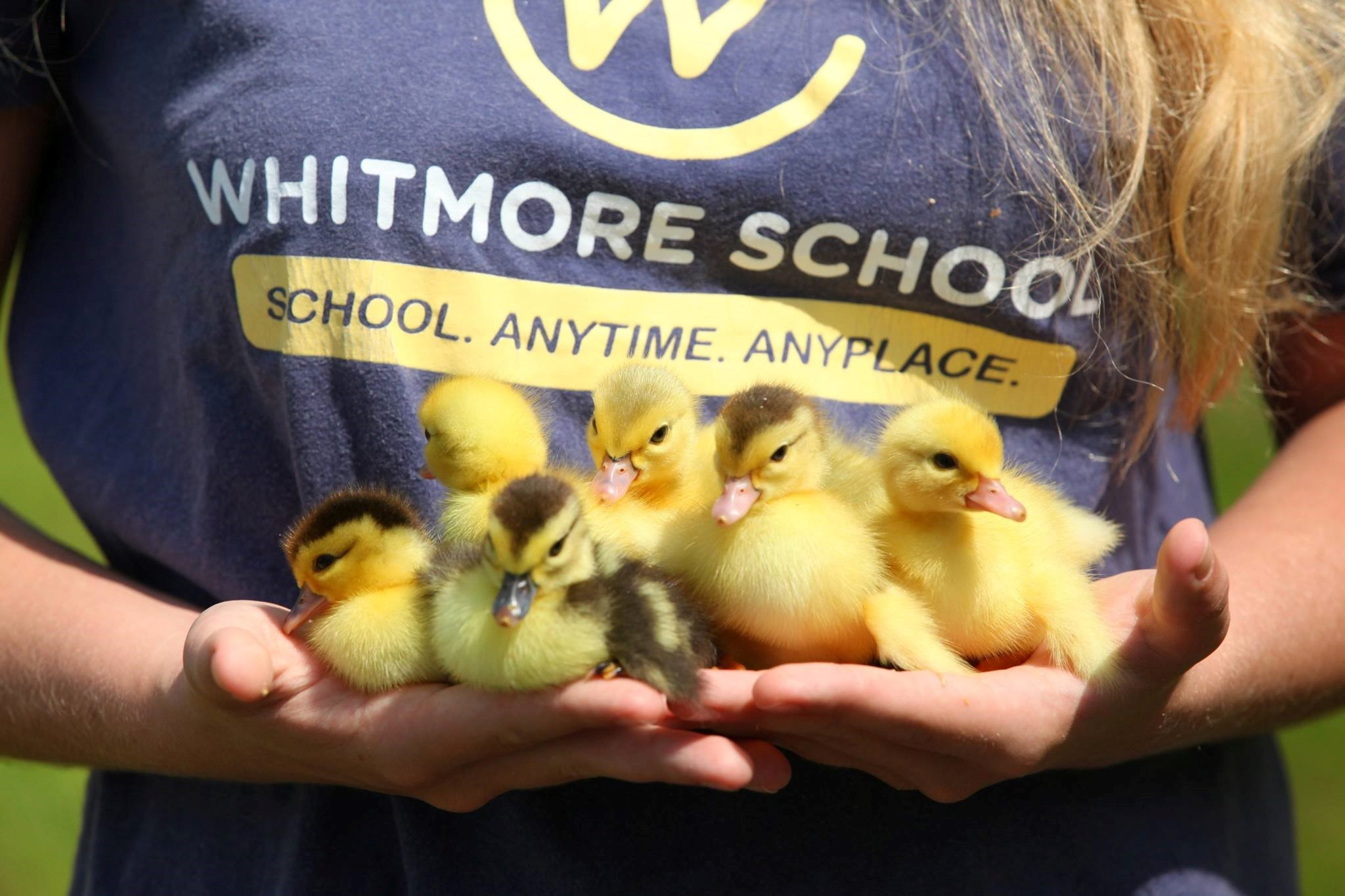 teen girl in Whitmore School T-shirt holding ducklings